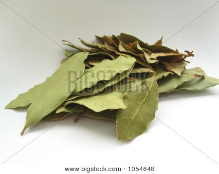 Bay Leaves Pile 2