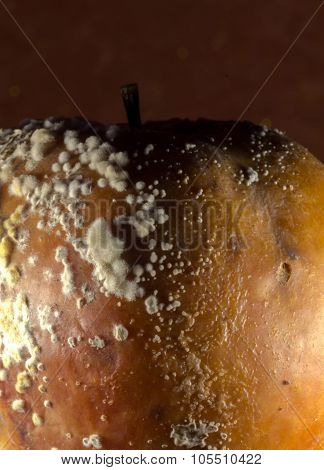 Rotting Apple And Growing Fungus On The Skin