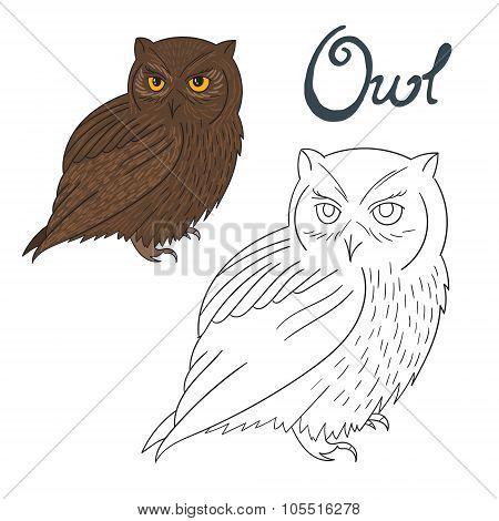 Educational game coloring book owl bird