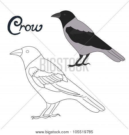 Educational game coloring book crow bird vector