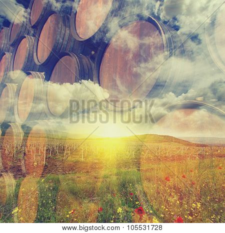 Double exposure: Row of wooden barrels of vine and Vineyard. Business concept. Vintage style picture