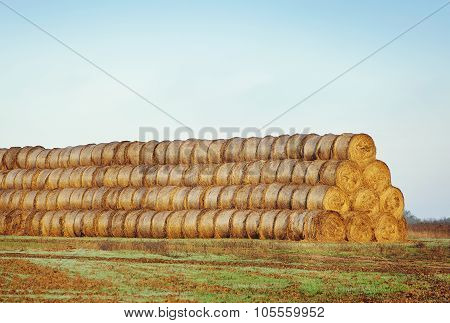 Haystacks Or Hay Rolls On  Field