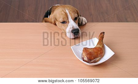 Dog in front dish on table and looking piece chicken