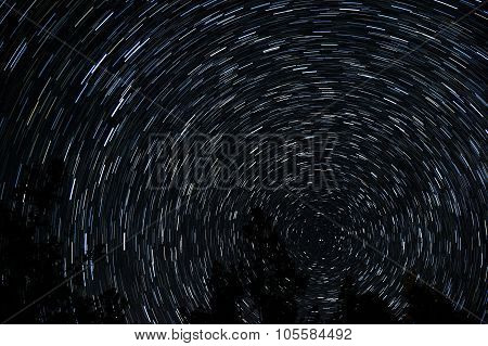 Star trails around pole star with tree silhouettes in foreground