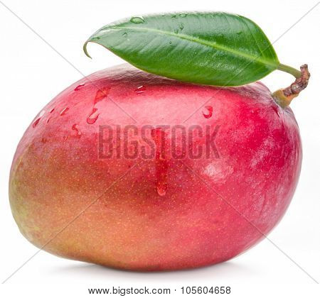 Mango fruit with leaf isolated on the white background. The picture of high quality.