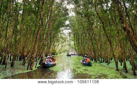 Tourist on boat in Tra Su indigo forest, eco tourist area at Mekong Delta for green ecotourism, hya