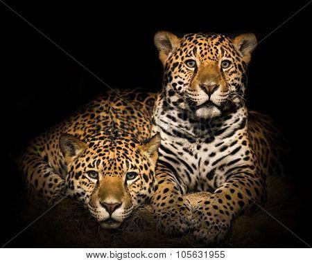 Jaguar Pair IV