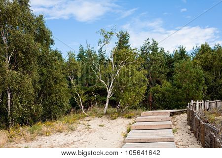 Forest And Wooden Road