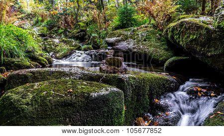Bavarian Forest, Bavaria, Germany