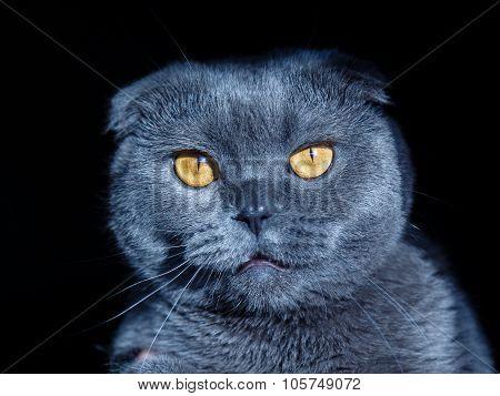 crazy cat portrait with different emotions