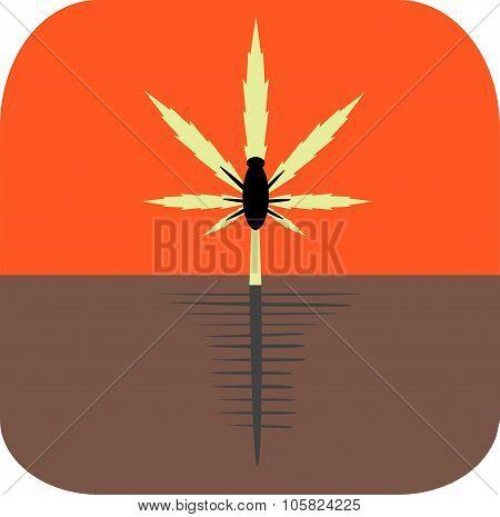 Marijuana pests