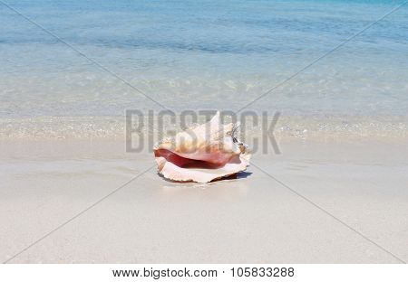 Conch Shell On Sand Beach With Sea