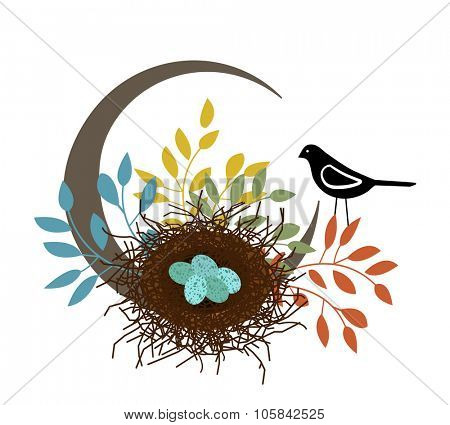 bird with eggs in the nest