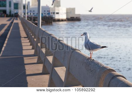 Seagull Perched On The Railing.