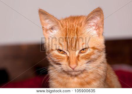 Kitten with devilishly look