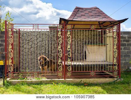 House For The Dog