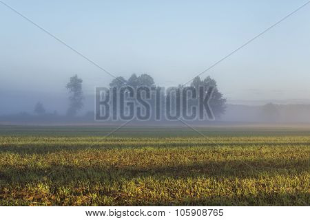 Misty Landscape With Trees And Meadow In Poland