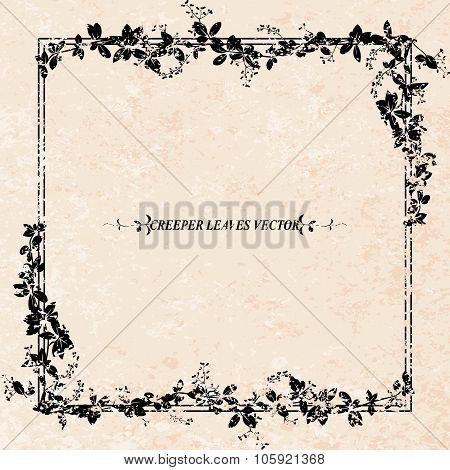 Creeper Flower Frame With Grunge Background