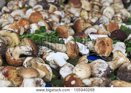 Closeup Of Boletus Edulis Mushrooms, Truffle Fair Moncalvo Italy