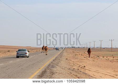 Road In The Desert Of Jordan