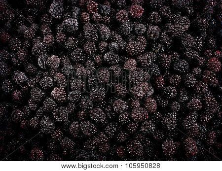 Frozen Domestic Wild Blackberries Background - Texture