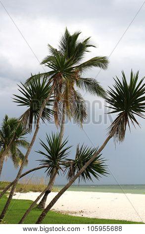 Palm trees and Dark Sky