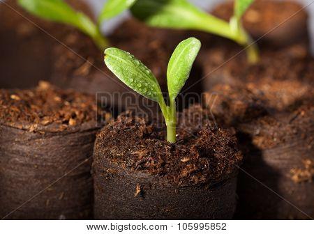 Fresh Watered Seedlings