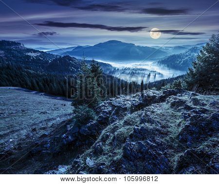 Valley With Conifer Forest Full Of Fog In Mountain At Night