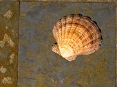 Seashell on Gray and Rust Colored Marble Tiles poster