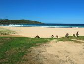 beach in australia with kangaroos blue sky and people swimming poster
