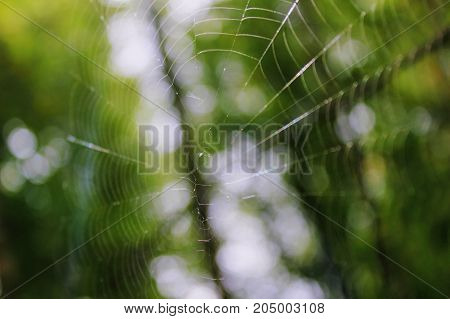 The spider spun a web on the branches of a tree in the forest.