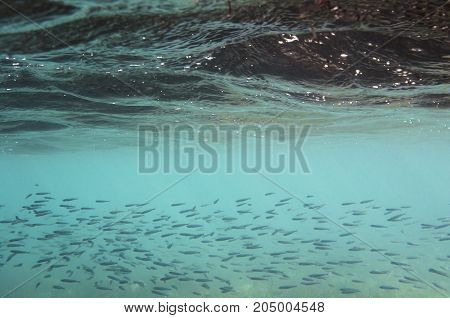 Sea water background with a flock of small fish