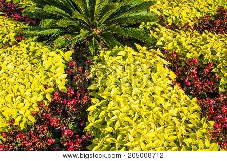 Leaves Similar To Mint And Red Flowers With A Palm Tree, Garden Background