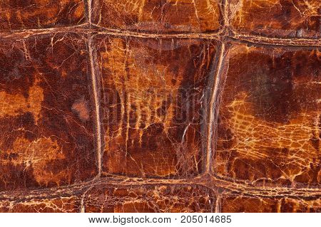 High resolution texture. Background. Natural skin. Pattern