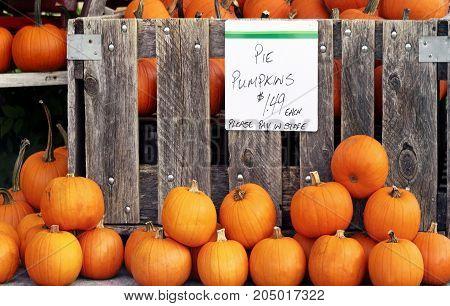 Pie pumpkins For Sale at farmer's market