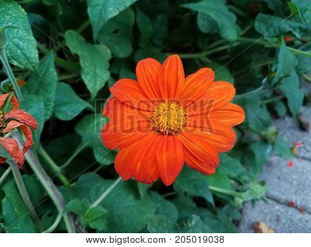 some red and orange flowers on a plant with green leaves