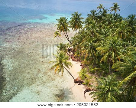 Beach with palms on caribbean island aerial drone view