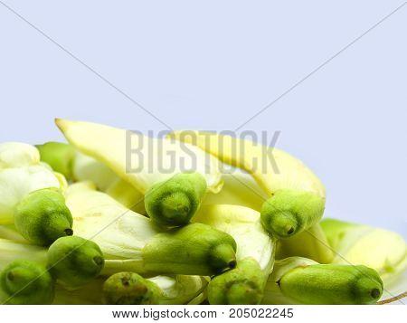 Closeup Vegetable Humming Bird Sesban Agasta on white background Edible flower.