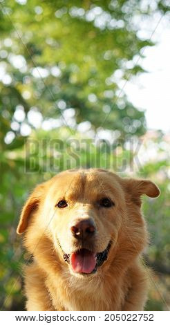 Happy golden dog in the garden with blurred background