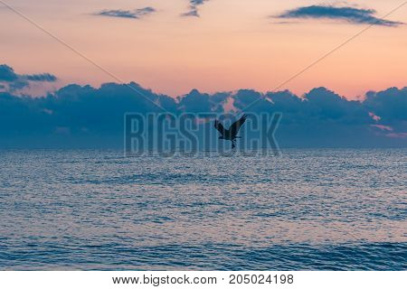 bird of prey flying over the ocean with freshly caught fish in its talon on an early summer morning