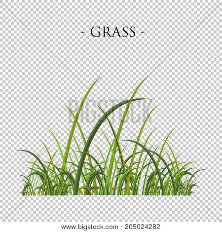 Green grass on transparent background. Vector illustration collection.