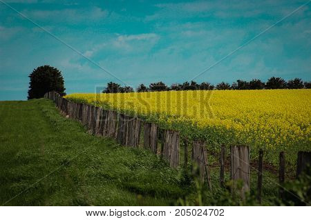 An old fence diving conola crops in rural Australia