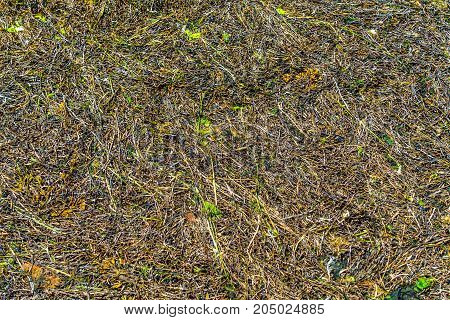 sea grass algae background texture Atlantic coast