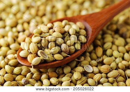 A close up of Coriander seeds on a wooden spoon.