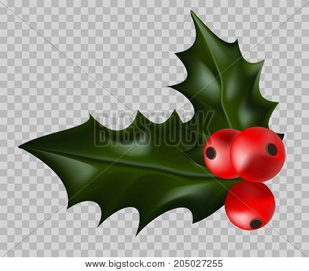 Christmas holly with ripe red berries isolated cartoon flat vector illustration on transparent background. Symbolic holiday wild plant with sharp dark green glossy leaves and bright small fruits.