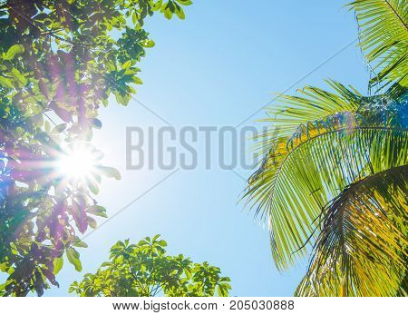 The bright sun rays shining through trees branches in sunny day Nature background.
