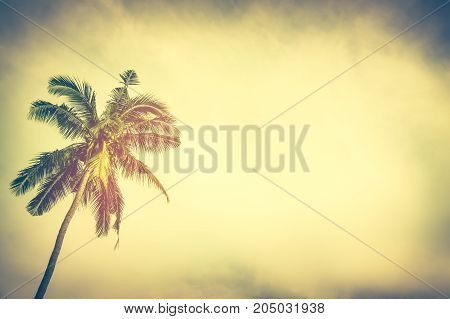 Natural background. Coconut palm tree under sunset sky in the evening with copy space. Serenity nature background. Warm vintage color filter effect with bright sunshine sepia tone.