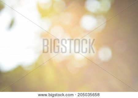 blurred sun light and green natural bokeh background.