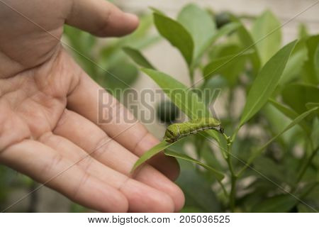 Bio technology professional engineer examining plant leaf disease insect.