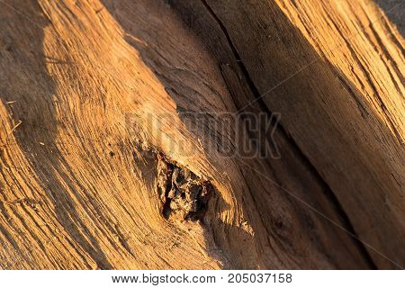 fiber, bough, texture, background, cracked, tree, trunk, core, light, pine, natural, fracture, split, stump, natural, surface, texture,